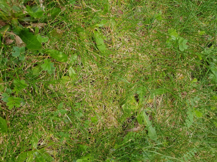 Maintain your lawn and avoid thatch!