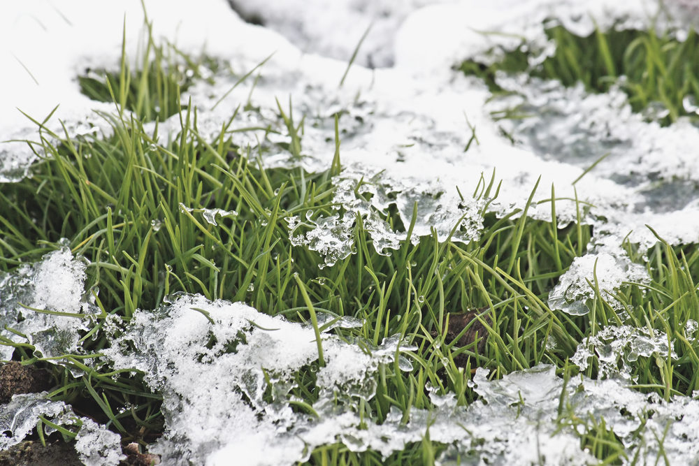 Grass maintenance: Five tips to get it through the winter!