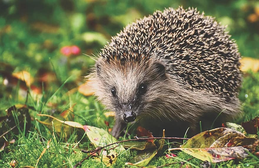 Robotic lawn mowers and hedgehogs: what risks? – Belrobotics